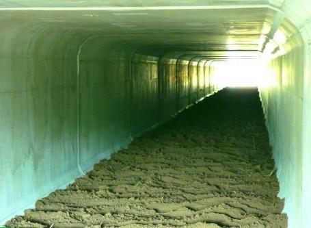 Túnel para anfibios