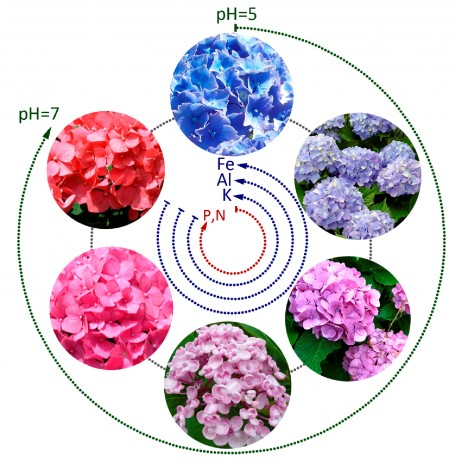 Esquema del color según el pH y los nutrientes