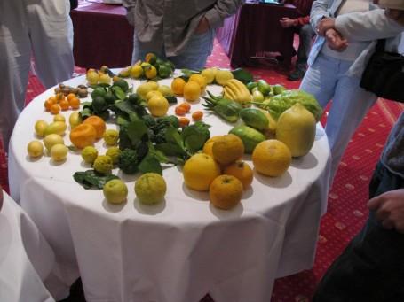 Los comúnmente llamados cítricos engloban los géneros Citrus, Fortunella y Poncirus. Foto: Agrumes Bachès.