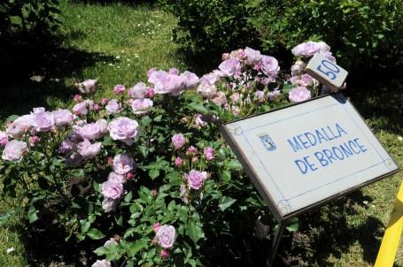 Este año concurren 83 variedades de rosas de 7 países. Medalla de bronce de la anterior edición. Puedes consultar los anteriores premios aquí.