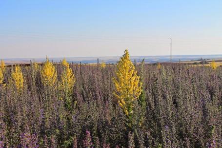 Los paisajes mediterráneos pueden ser una fuente de inspiración de jardines naturalistas, como nos explica Miguel en su interesantísimo blog Arañazos en el Cielo.