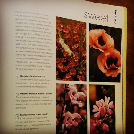 Apartado dedicado a las sensaciones que producen los colores. El rosa poco saturado es uno de los colores más empleados por Oudolf.