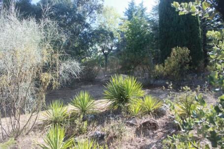 Estado actual del jardín, sin planificación y falto de mantenimiento.