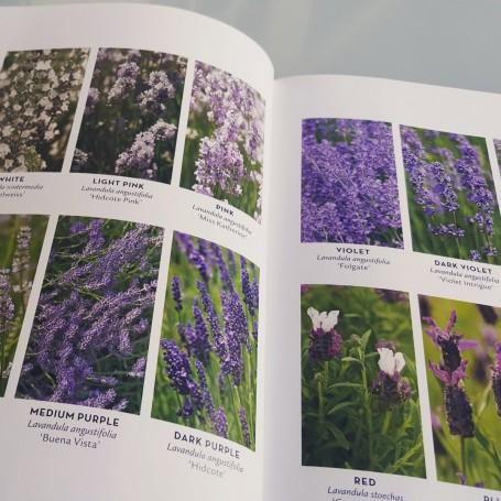 lavender-handbook-colores