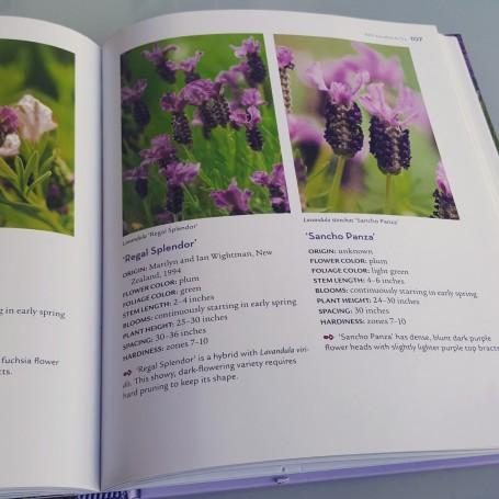 lavender-handbook-cantueso