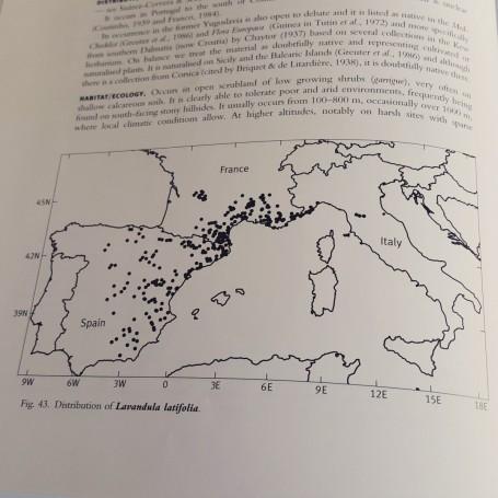 genus-lavandula-geografia