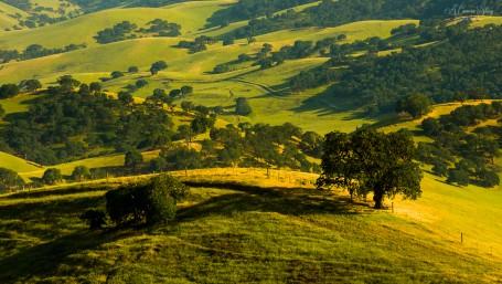 Dehesa californiana